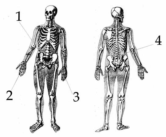 Обобщённая схема телесных