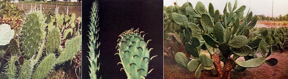 Pinya de Rosa, Blanes, Испания, сад, кактусы