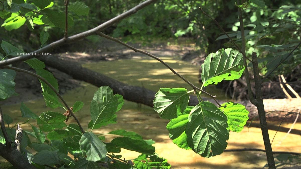 Секс в лесных дебрях