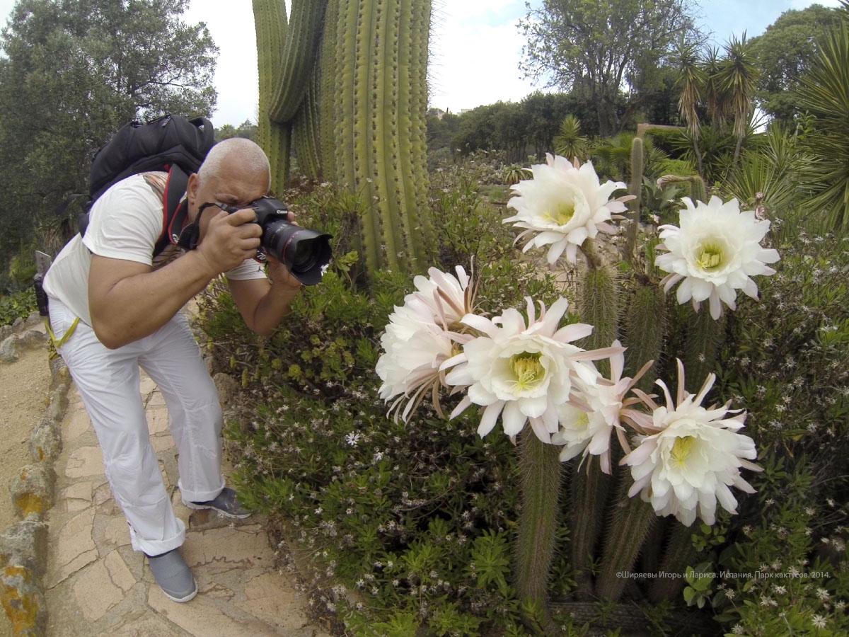 Испания, кактусы, Pinya de Rosa
