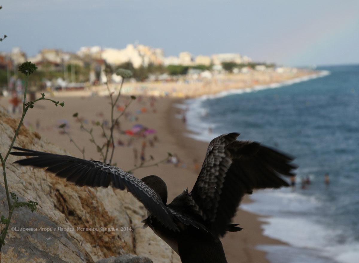 Испания, бакланы, скалы, Калелья, Calella