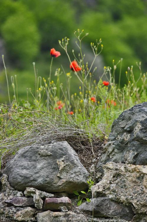Нагорный Карабах.